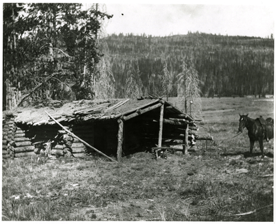 Saddle Horse Tied To Log Cabin With Sod Roof