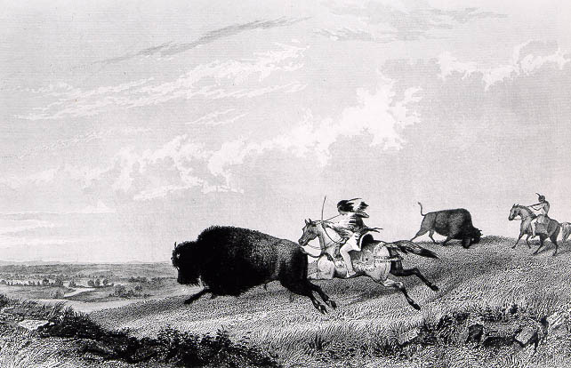 Image of an Indian buffalo hunt